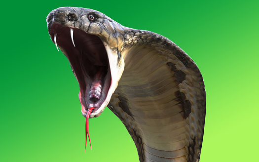 映画 キング コブラ 「貴様は病気だ。俺が特効薬さ」―『コブラ』は絶頂期のスタローンだからこそ実現した無頼刑事アクション!