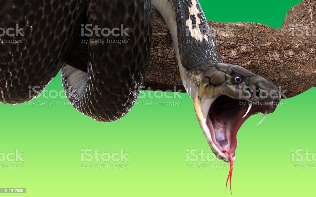 Serpiente cobra de rey - foto de stock
