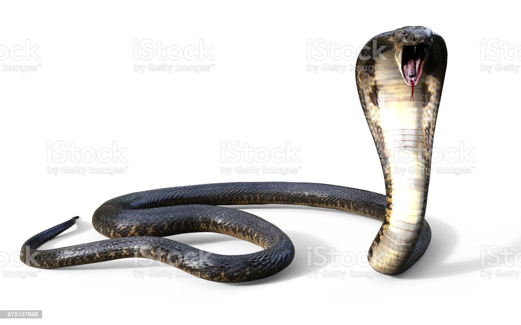 King Cobra Snake Stock Photo & More Pictures of Adder | iStock