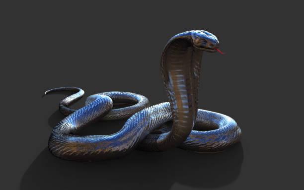 King Cobra 's werelds langste giftige slang geïsoleerd op donkere achtergrond foto
