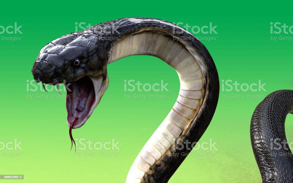 King Cobra The World's Longest Venomous Snake stock photo