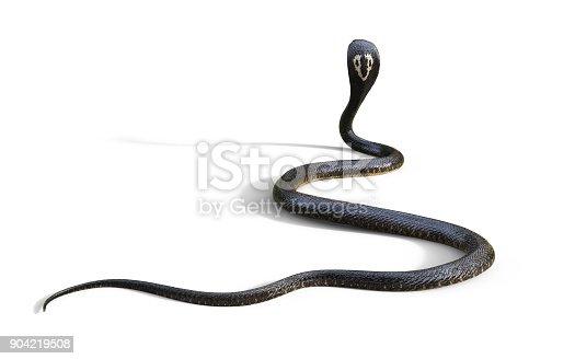 istock King Cobra The World's Longest Venomous Snake 904219508