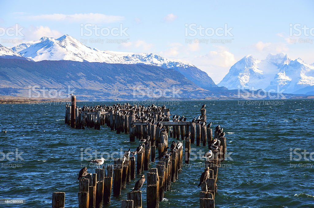 King Cormorant colony, Old Dock, Puerto Natales, Chile stock photo
