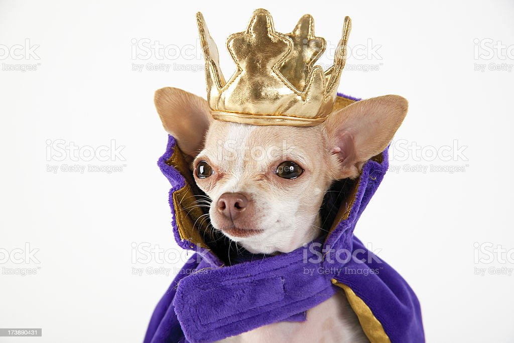 king dog stock photo