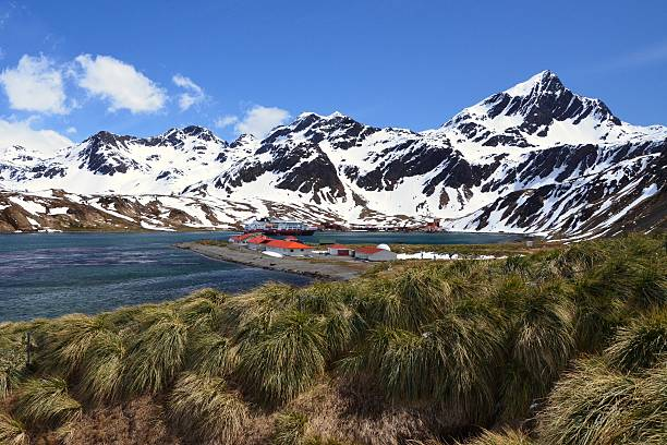 King Edward Point, South Georgia The buildings of the research station at King Edward Point sit behind tussock grass with Grytviken and mountains in the background on South Georgia. south georgia island stock pictures, royalty-free photos & images