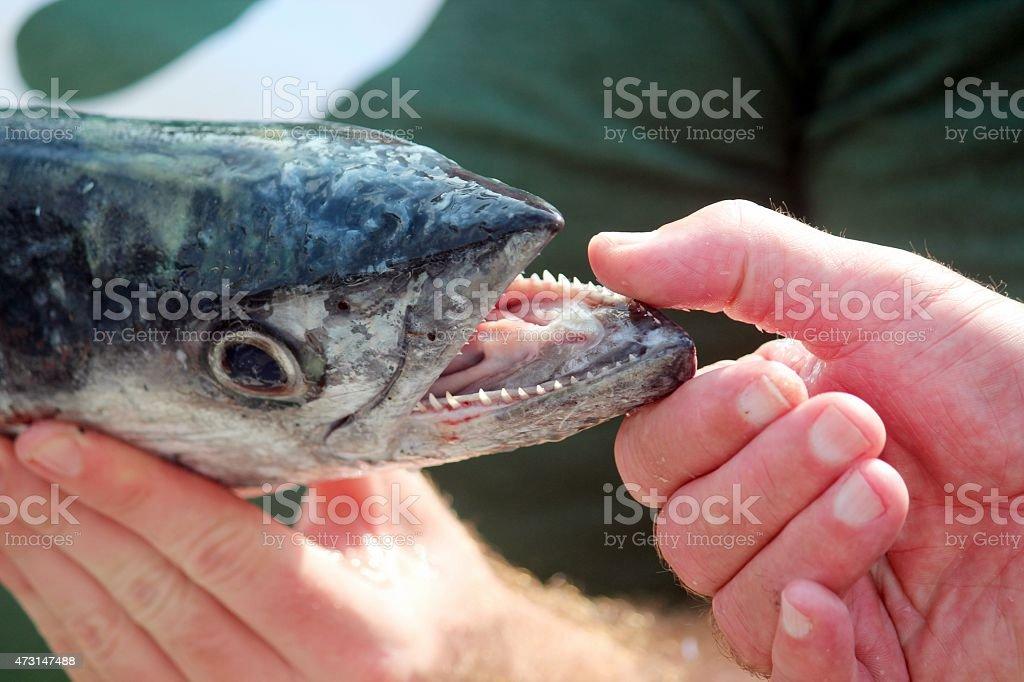 Peixe cama King-size - foto de acervo