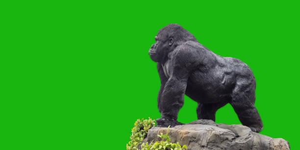 king kong (gorilla) statue auf grünem hintergrund. - affentattoos stock-fotos und bilder