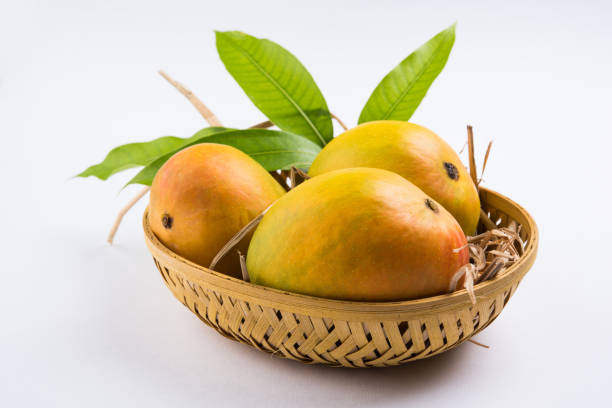 King of fruits; Alphonso yellow Mango fruit duo with stems and green leaf isolated on white background, a product of Konkan from Maharashtra - India – Foto
