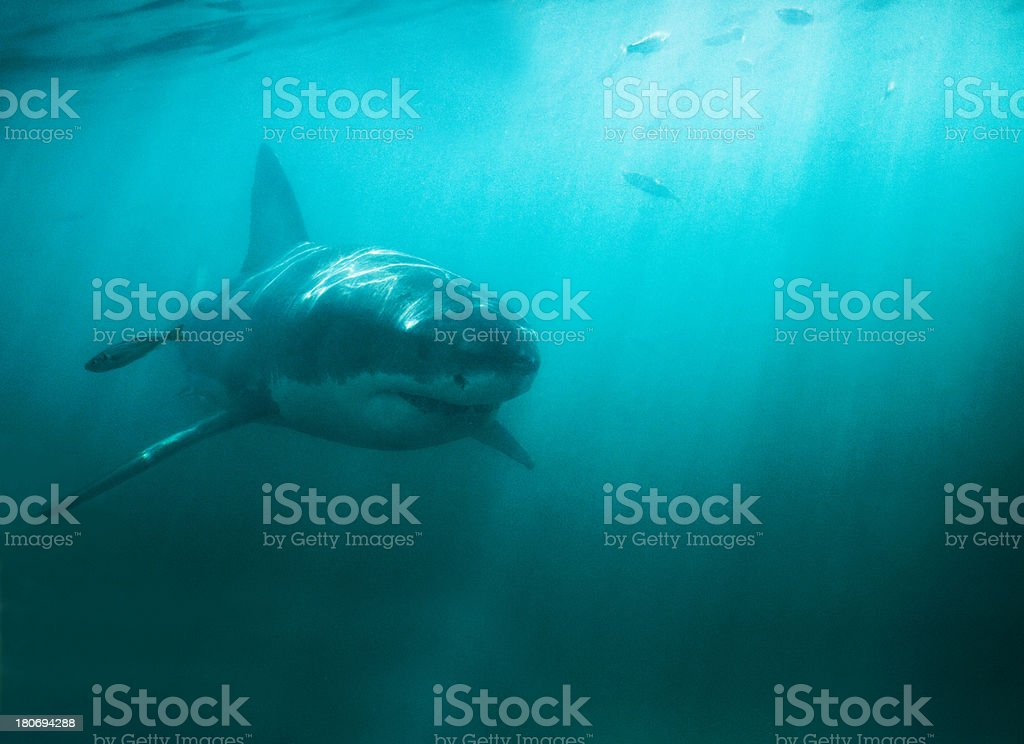 King of the deep stock photo