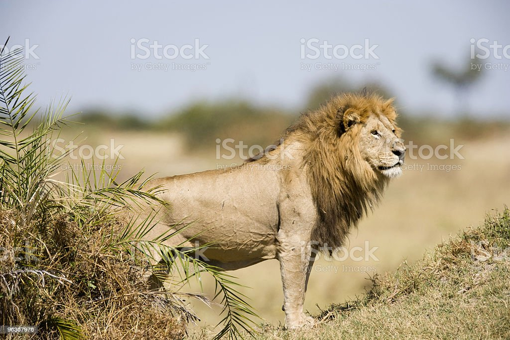 King of the Hill royalty-free stock photo