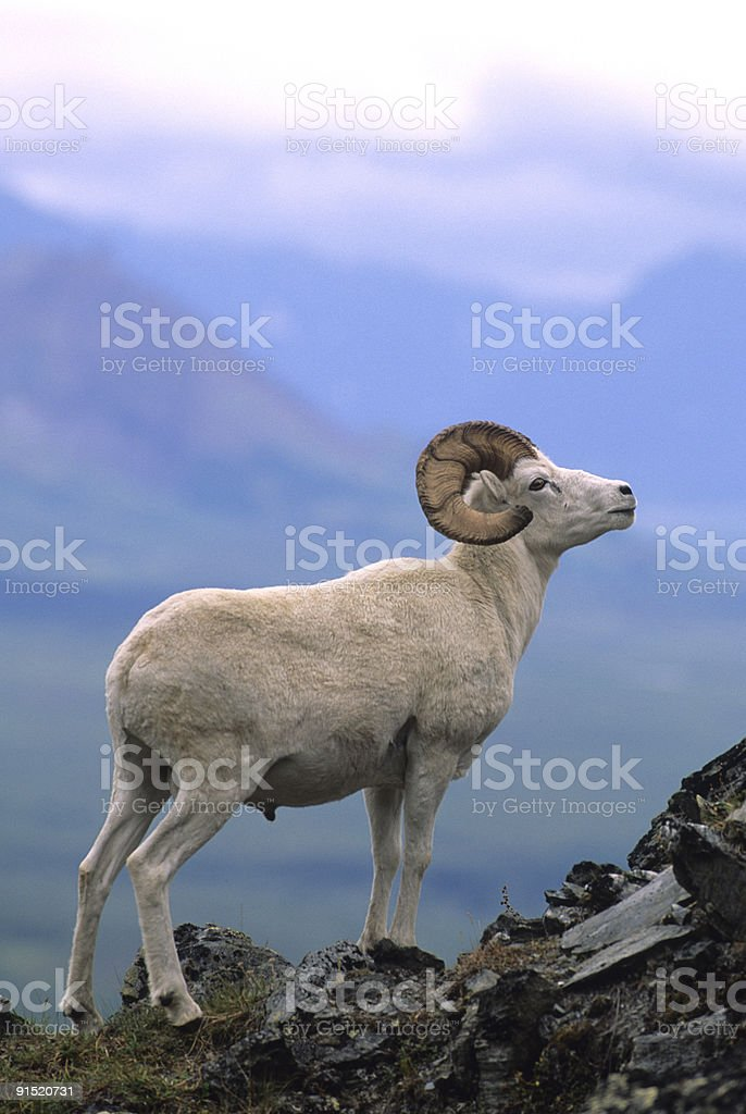 King of the Mountain stock photo