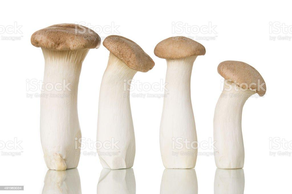 King Oyster mushroom (Eringi) isolated on white. stock photo