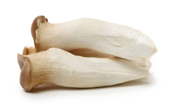 King oyster mushroom Pleurotus eryngii King oyster mushroom Pleurotus eryngii on white background mushrooms: oyster mushrooms isolated on white background stock pictures, royalty-free photos & images