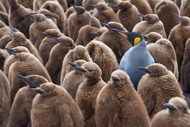 Penguin crèche avec très grand lit - Photo