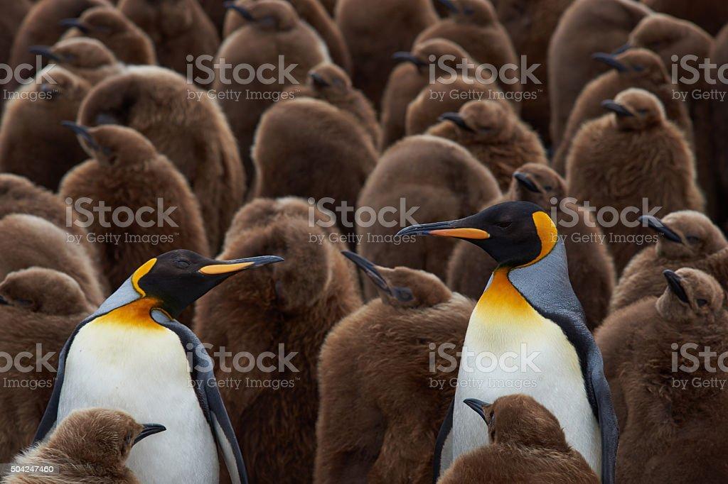 Pinguim-rei Creche - foto de acervo