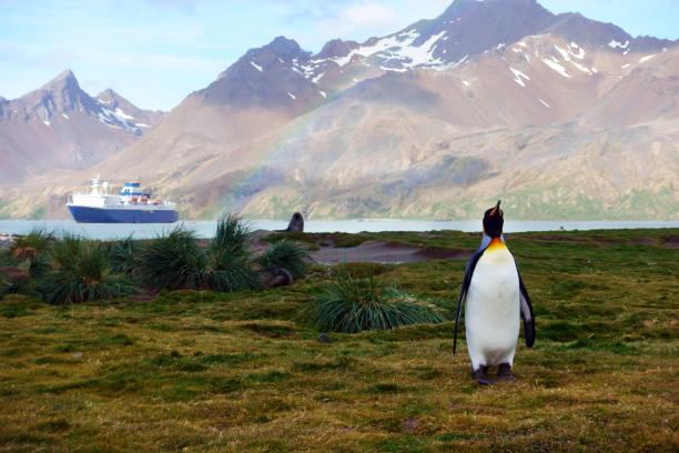 Pingüino rey caminando en una playa de arena - foto de stock