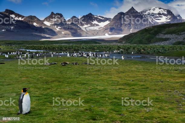 King penguins on salisbury plains picture id697827012?b=1&k=6&m=697827012&s=612x612&h=bcbkyg4 c7iqilxjhy91 u0al54e1hdgx8eagr2opla=