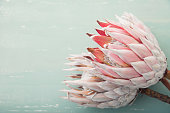 King protea flower