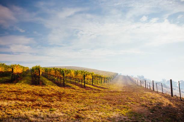 King Valley Vineyard in Australia stock photo