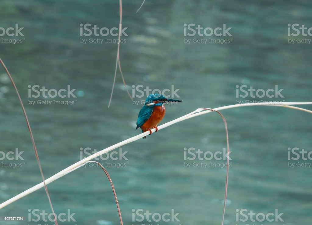 Kingfisher bird kingfisher bird standing on a branch in the lake shore Africa Stock Photo
