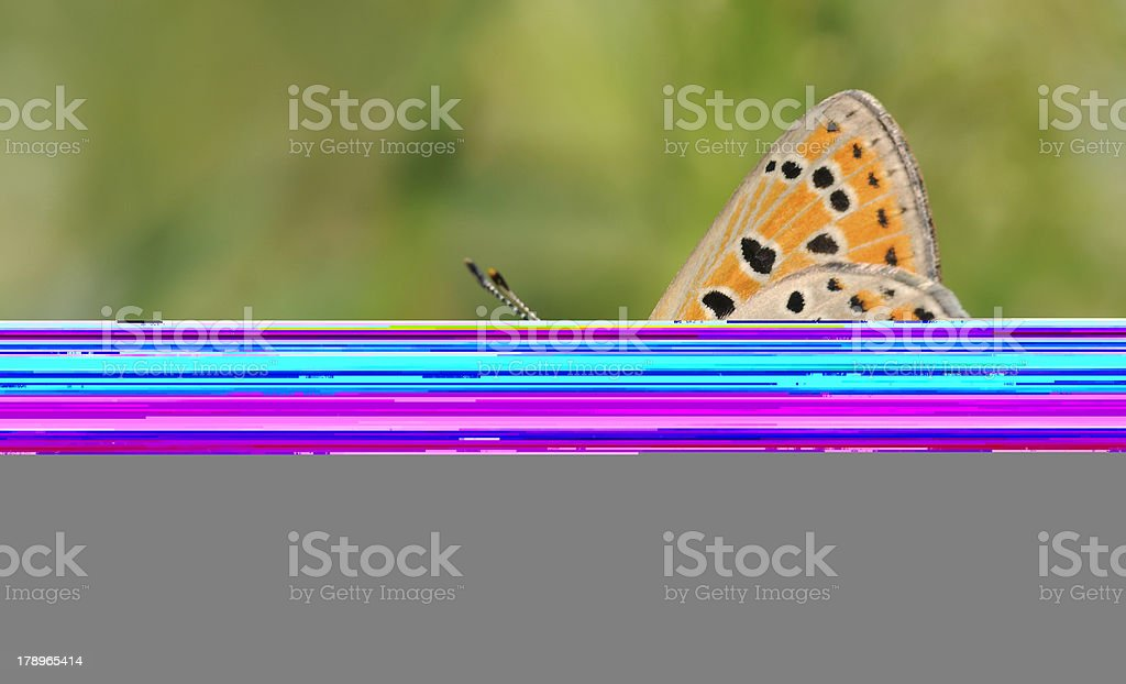 kingfisher on a water pipe royalty-free stock photo