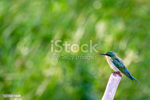 istock kingfisher 1023021608