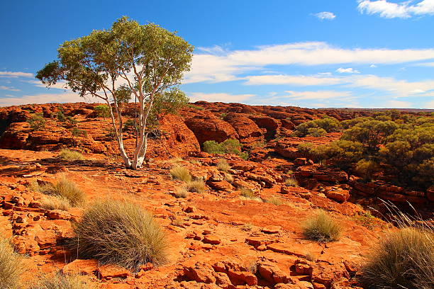 Kings Canyon, Australia Spectacular Red Center of Australia with geological formations. outback stock pictures, royalty-free photos & images
