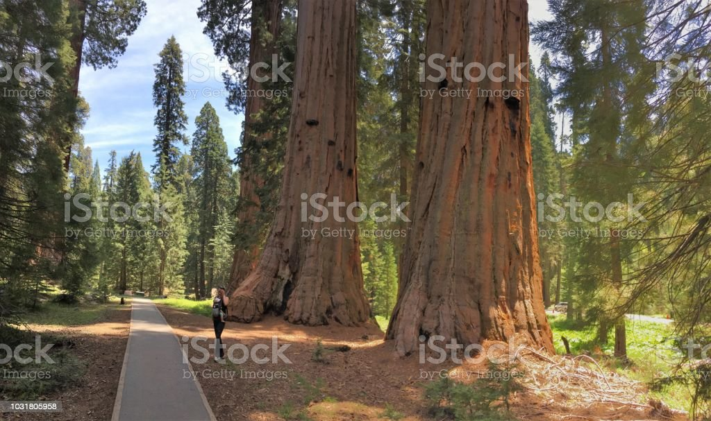 kings canyon sequoia national park, usa stock photo