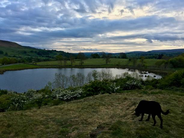 king's lake near middleham, north yorkshire - mcdermp stock pictures, royalty-free photos & images