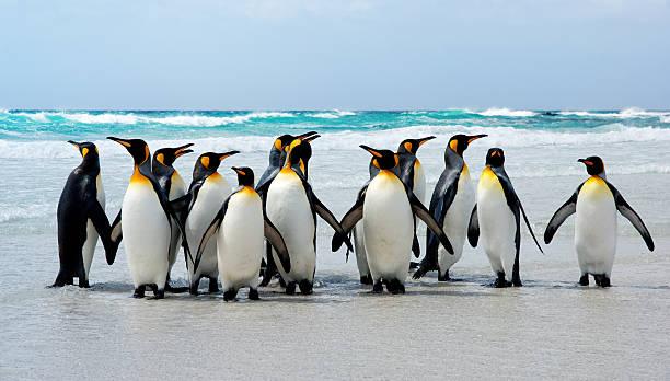 Kings de la plage - Photo