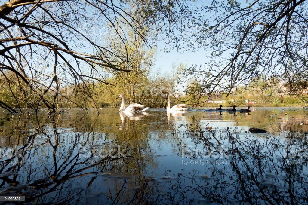 Kings Pond in Alton stock photo