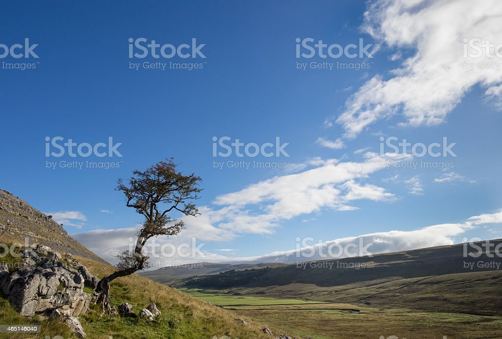 Kingsdale Tree stock photo