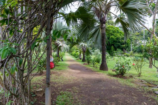 kingstown, st. vincent und die grenadinen - botanischer garten - kingstown stock-fotos und bilder