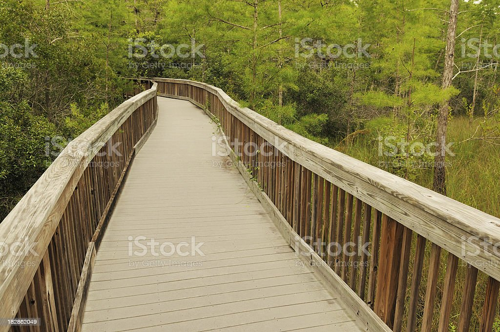 Kirby Storter Boardwalk at Big Cypress Nature Preserve Florida stock photo