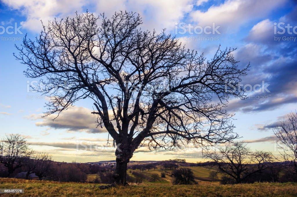 Kirschbaum Mit Himmel Im Winter – Foto