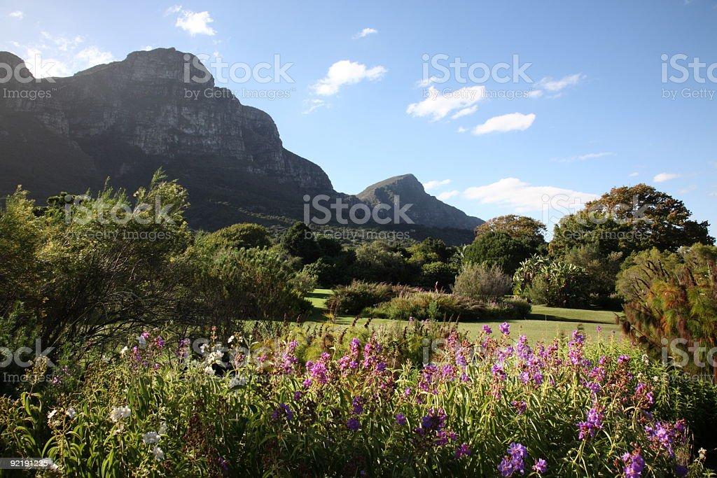 Kirstenbosch Botanic Gardens in Cape Town stock photo