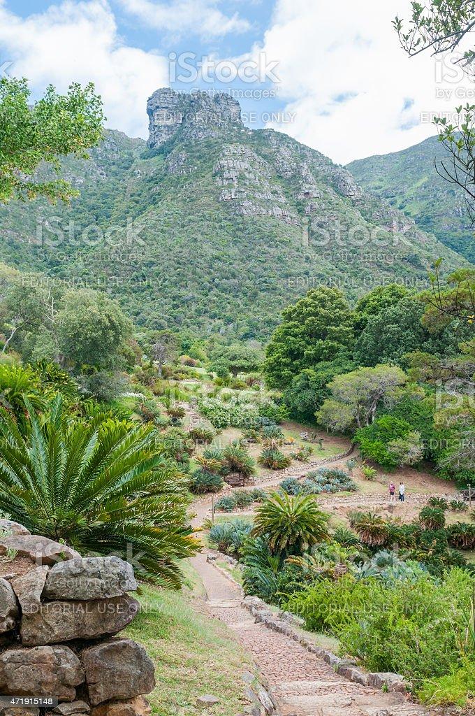 Kirstenbosch Botanical Gardens and Castle Rocks on Table Mountai stock photo