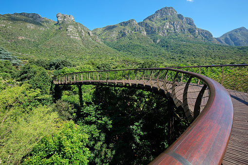Kirstenbosch Botanical Gardens Stock Photo - Download Image Now