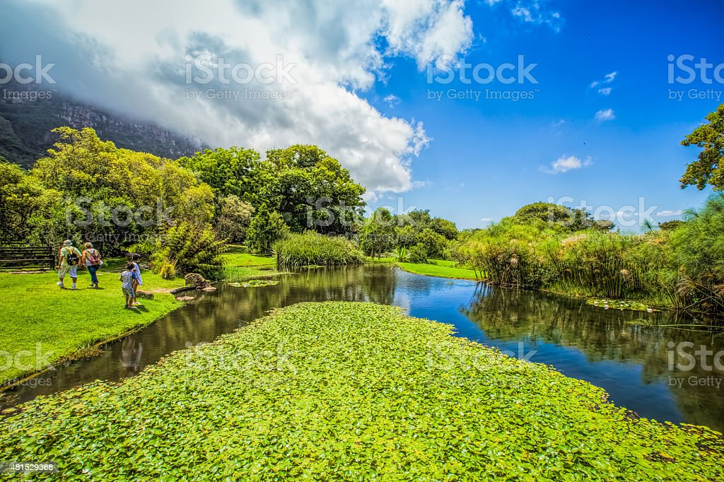 Kirstenbosch Gardens stock photo