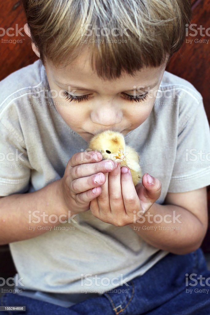 Kissing a chick royalty-free stock photo