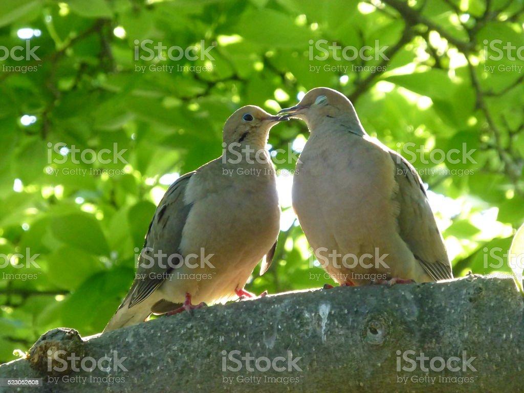 Kissing Birds stock photo