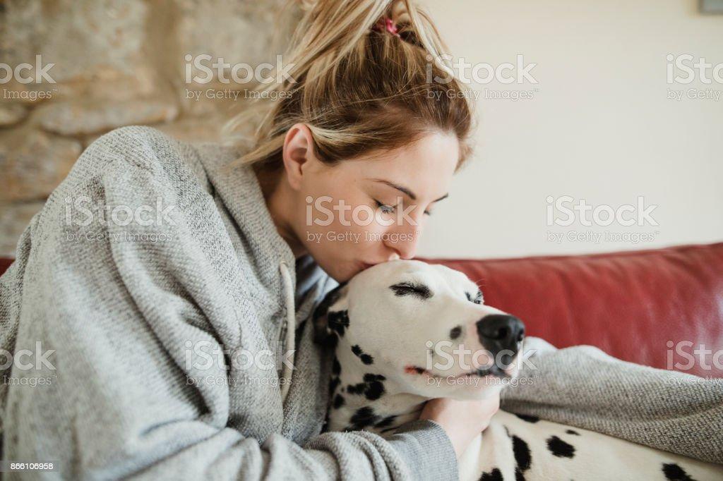 Kissing Pet Dalmatian Dog stock photo