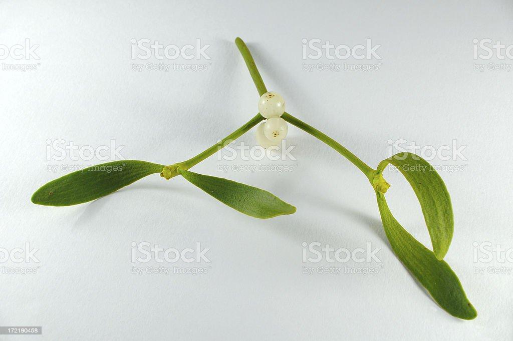 kissme mistletoe royalty-free stock photo