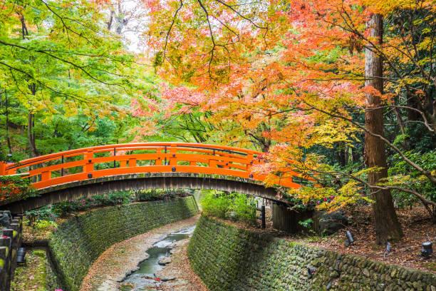 Kitano Tenmangu Kyoto, Japan - November 23, 2018: Every year on November to mid December, Kitano Tenmangu will open its garden to the public during the peak of the autumn leaf season. shinto shrine stock pictures, royalty-free photos & images