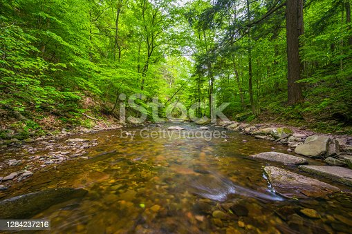 Kitchen Creek in a lush forest, in Ricketts Glen State Park, Pennsylvania