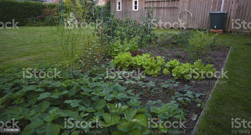 Kitchen Garden royalty-free stock photo