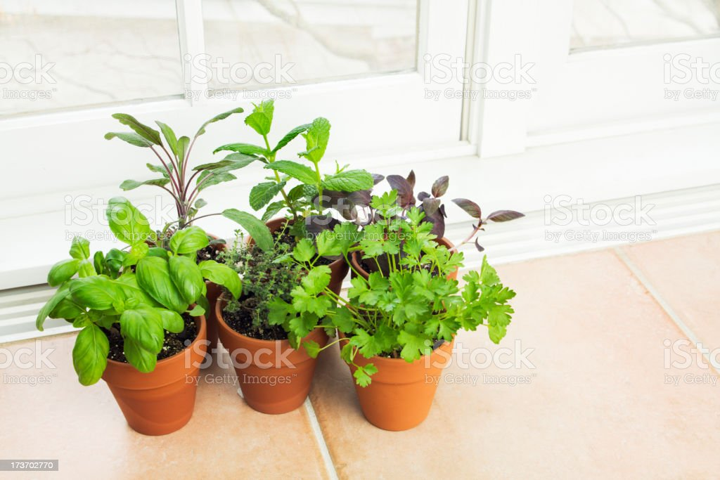 Kitchen Herb Garden By The Window Stock Photo Download Image Now Istock
