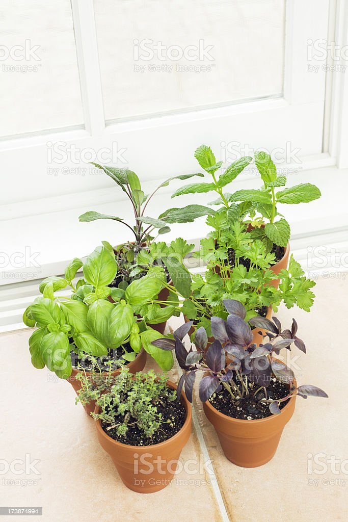 Kitchen Herb Garden by the Window Vt royalty-free stock photo
