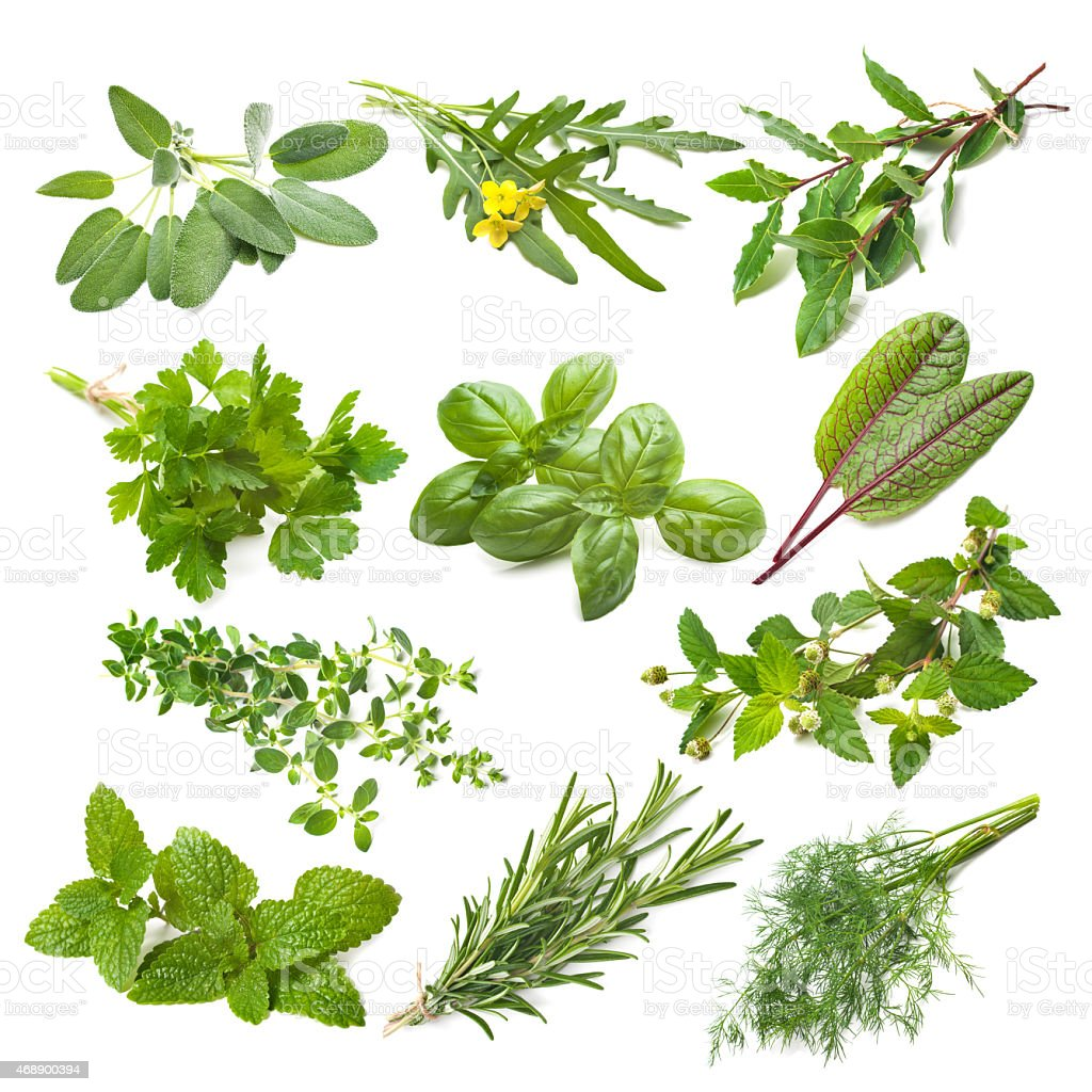 Kitchen herbs collection stock photo