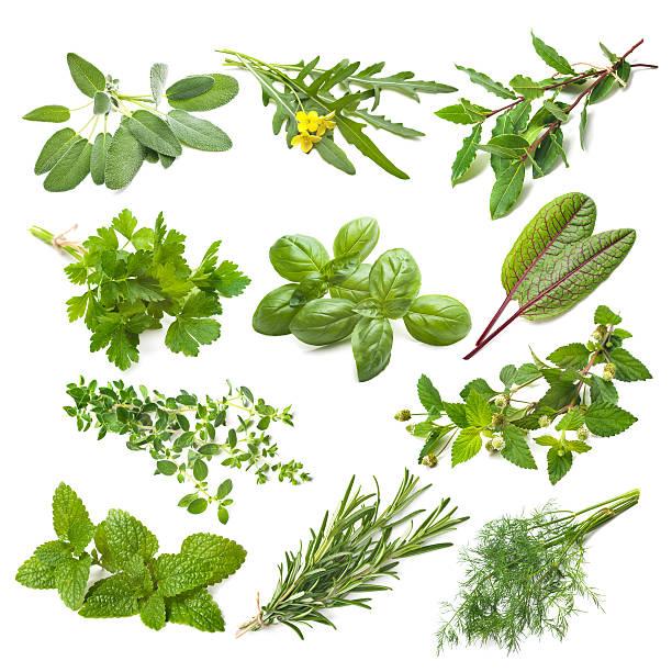 raccolta di erbe aromatiche cucina - menta erba aromatica foto e immagini stock